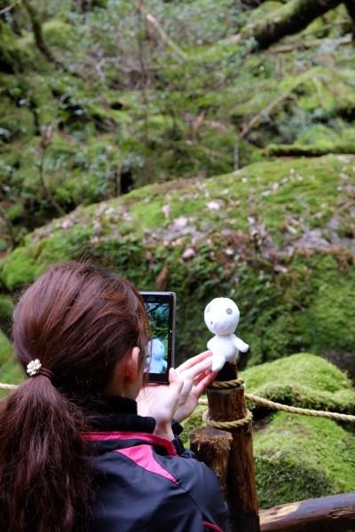 苔むす森にてコダマを撮影中