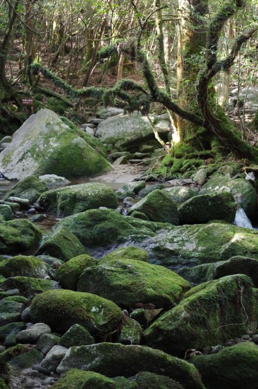 白谷雲水峡の苔むした景色