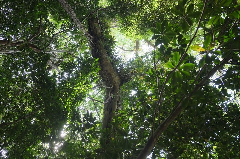 屋久島世界自然遺産森あるきツアー