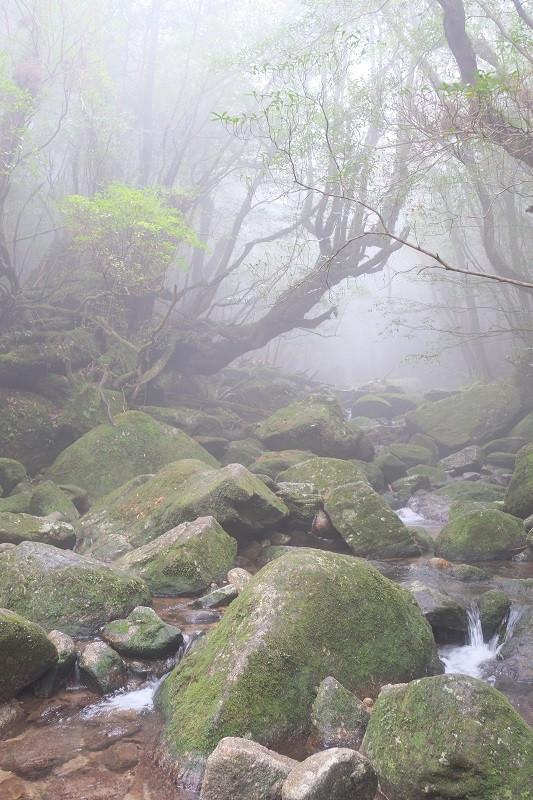 屋久島白谷雲水峡ガイドツアー