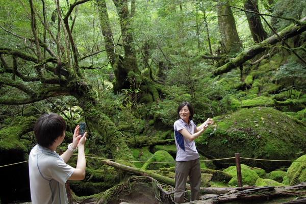 屋久島エコツアー風景