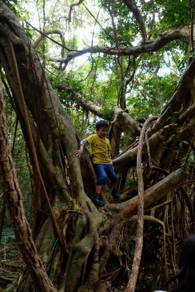屋久島猿川のガジュマル自然あそび