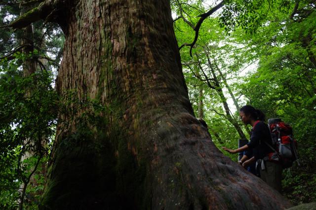 巨木屋久杉とおさらば