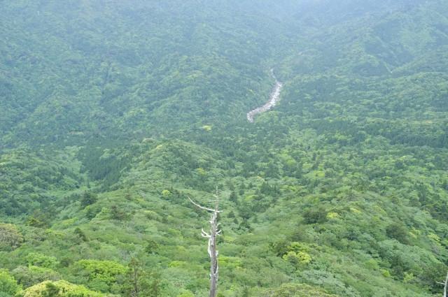 屋久島太鼓岩からの展望新緑
