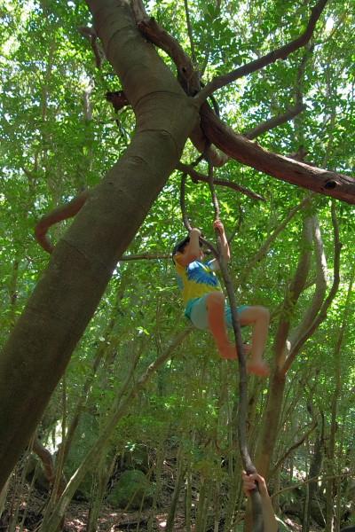 屋久島世界自然遺産の森でぶら下がり