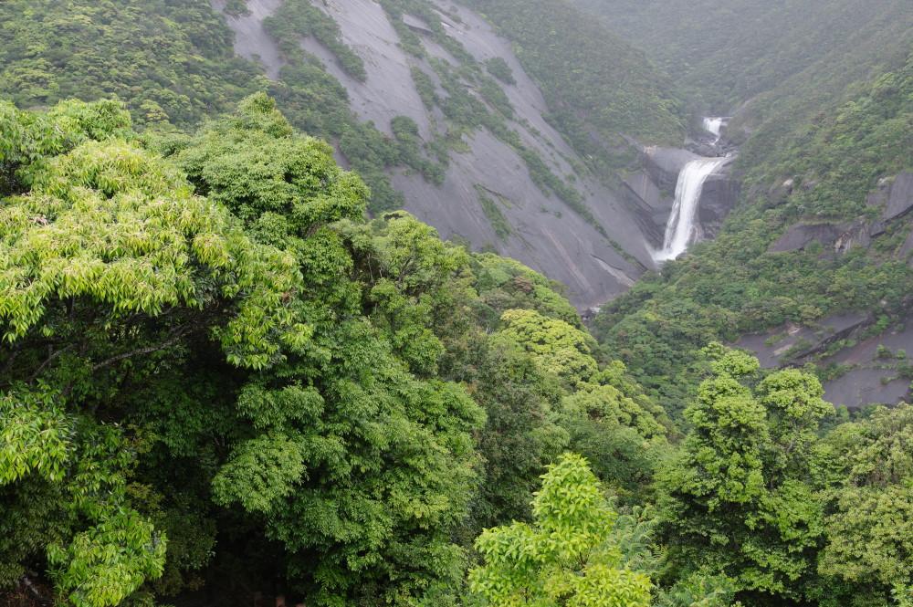 屋久島、新緑の頃の千尋の滝