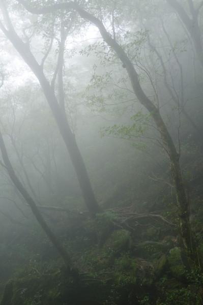 霧立ち込める屋久島の森