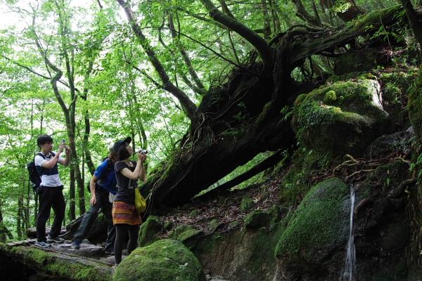 屋久島の森をフォトトレック