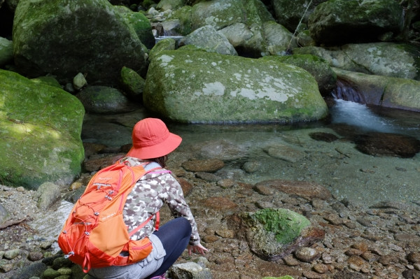 屋久島世界自然遺産の森で沢休憩
