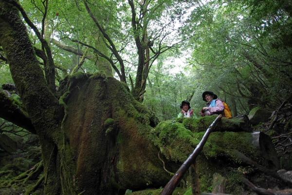 白谷雲水峡苔むす森にて