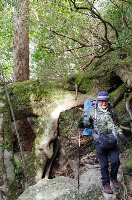 縄文杉コースの帰りの登山道
