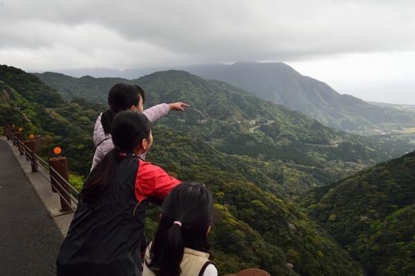 屋久島白谷雲水峡線の新緑