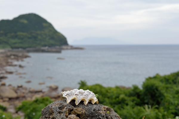 屋久島里の観光ツアー