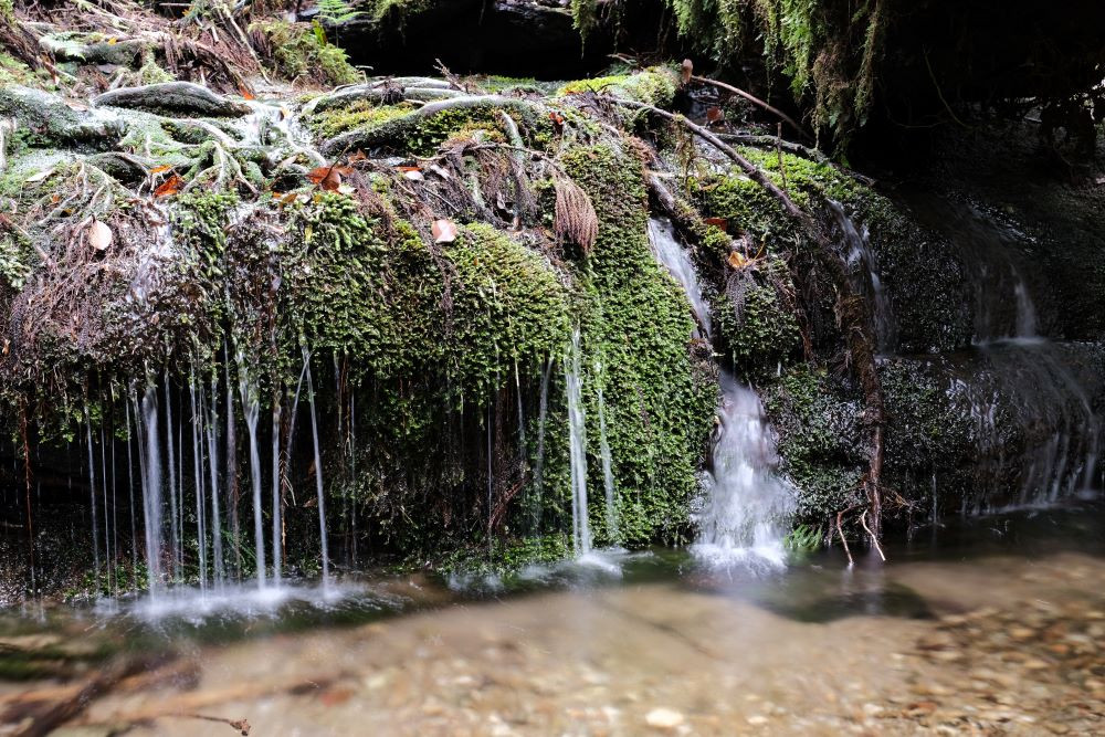 屋久島太忠岳登山道上の水場