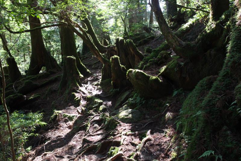 屋久島ヤクスギランドの木漏れ日