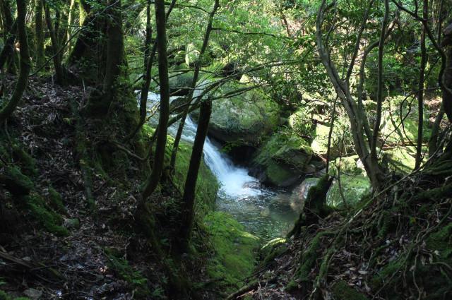屋久島白谷雲水峡の小さい滝