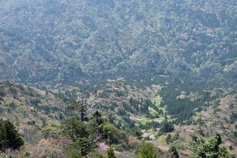 屋久島白谷雲水峡太鼓岩からの景色