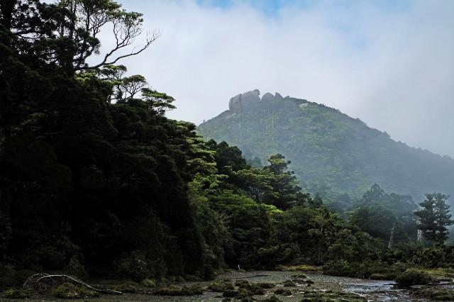 屋久島シャクナゲ登山