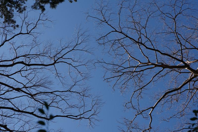 血管のような枝っぷりヤクスギランドにて