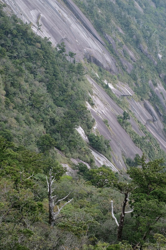 屋久島モッチョム岳花崗岩