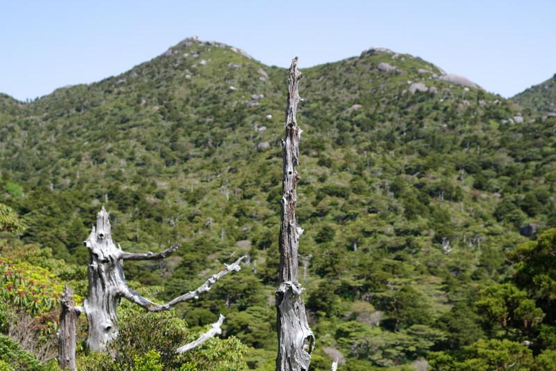 屋久島白骨樹と黒味岳