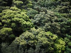 もう一つの森・照葉樹林