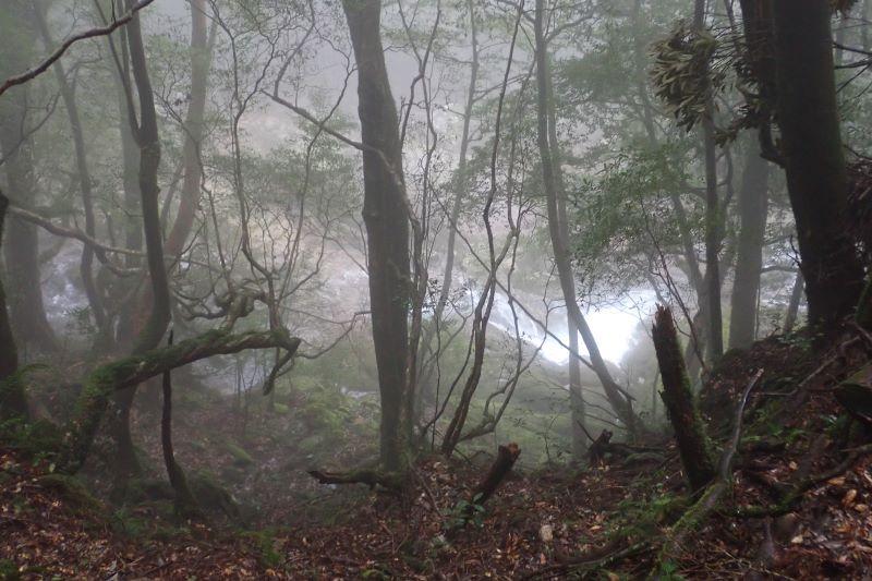 屋久島白谷雲水峡の森風景