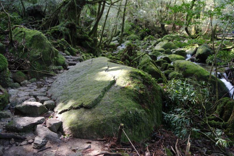 屋久島白谷雲水峡木漏れ日