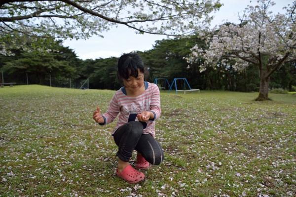 屋久島子ども桜で遊ぶ