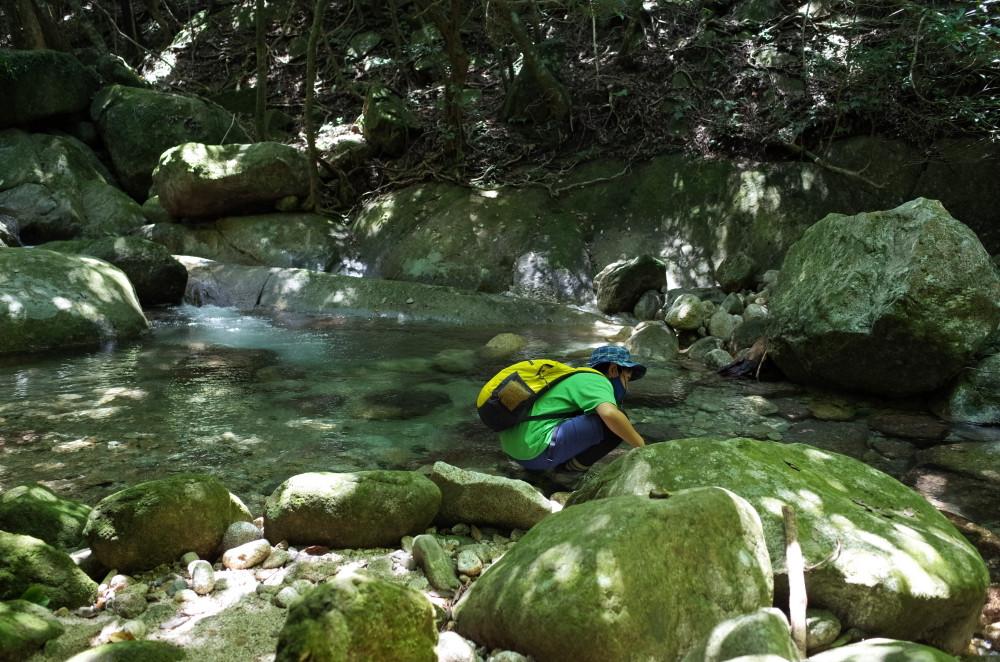 屋久島世界自然遺産の森西部林道の川
