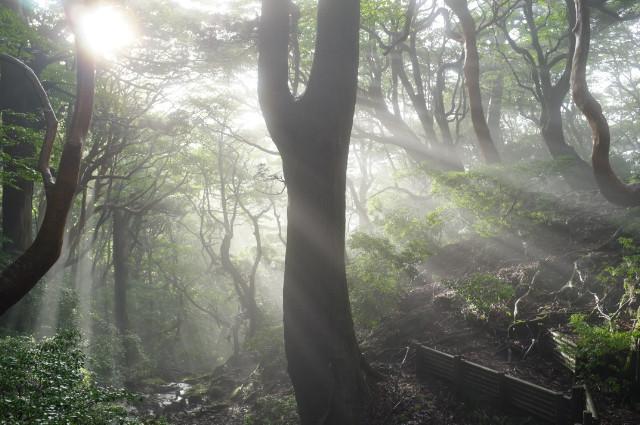 縄文杉高塚小屋の光芒