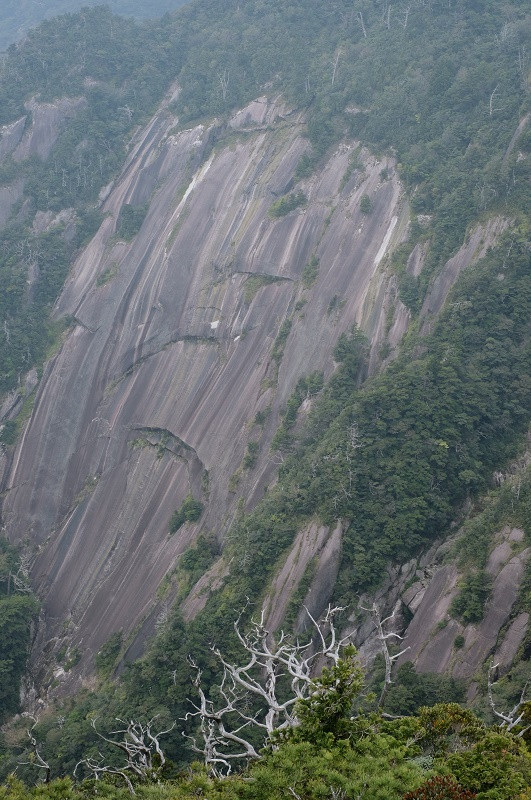 屋久島花崗岩と白骨樹