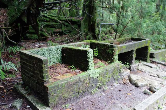 縄文杉コースの山小屋跡