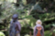 白谷雲水峡の苔むす森.jpg