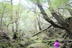 苔むす森(旧称もののけ姫の森)・屋久島白谷雲水峡
