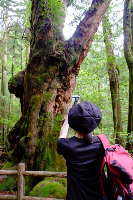 屋久島の仏陀杉
