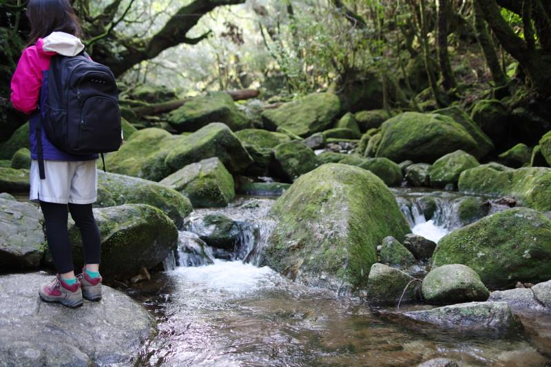 屋久島白谷雲水峡苔むす渓谷