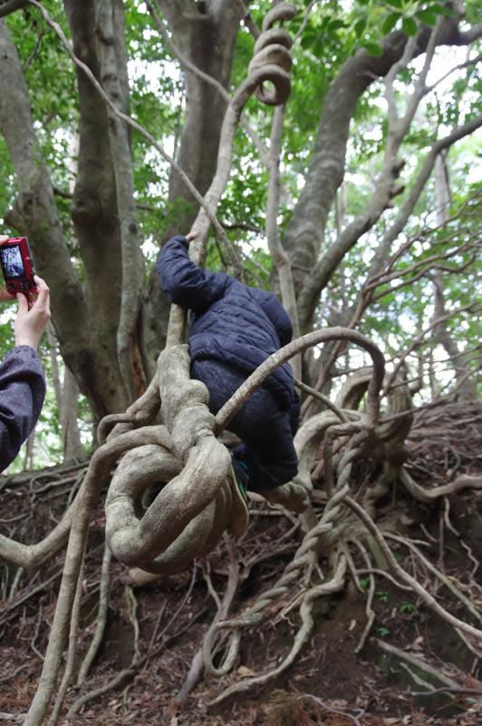 屋久島世界自然遺産のつる植物