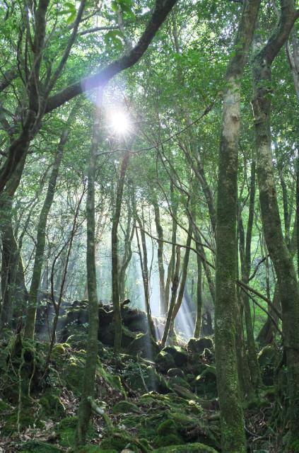 屋久島白谷雲水峡の森の風景2