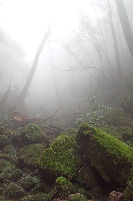 屋久島白谷雲水峡幻想的な世界