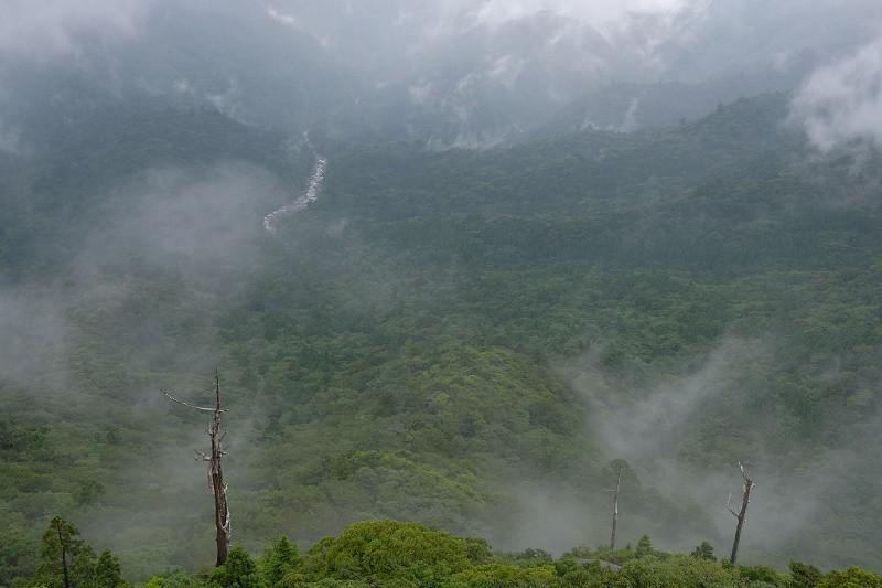 屋久島白谷雲水峡太鼓岩展望