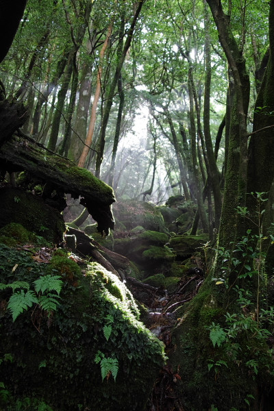 屋久島の森の木漏れ日