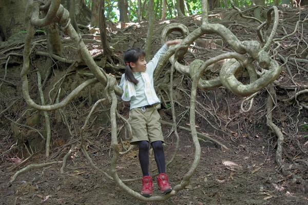 屋久島のつる植物