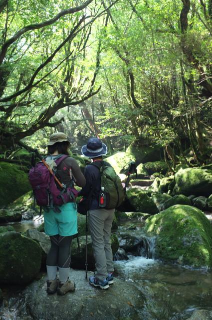 屋久島白谷雲水峡ガイドツアーの光景