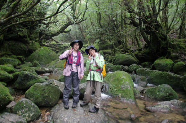屋久島白谷雲水峡の苔むす渓谷