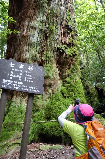 屋久島白谷雲水峡七本杉
