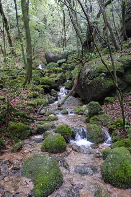 白谷雲水峡の苔むした森