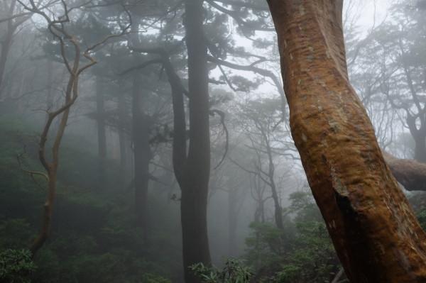 屋久島幻想的な森