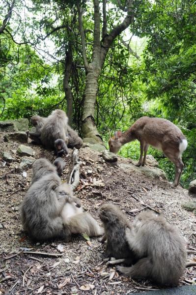 屋久島で動物をゆっくり見えるエコツアー