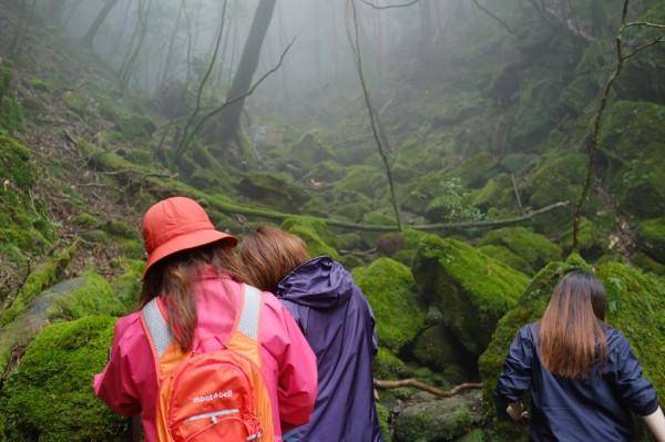 屋久島白谷雲水峡ツアー苔むす森